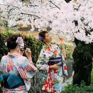 dress and blossom